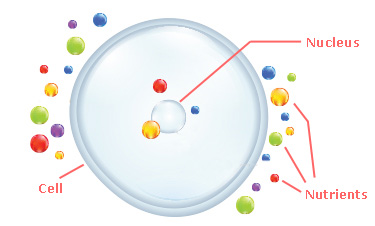 Inefficient absorption of nutrients by the human cell without Theta Activate.